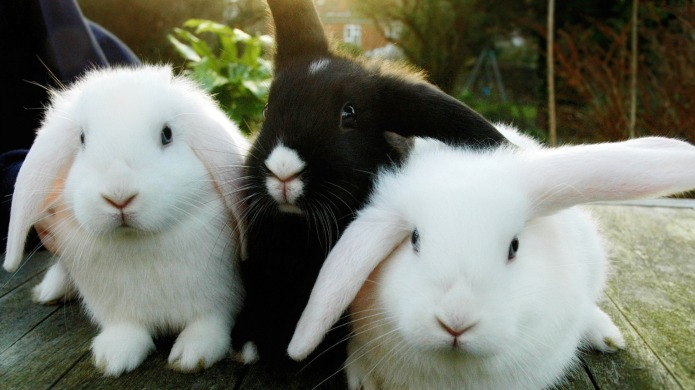 A pop-up bunny spa is opening