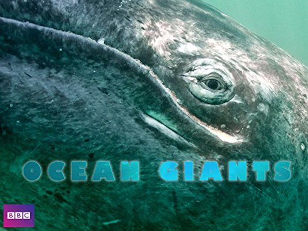 What's coming and going on Netflix: Ocean Giants