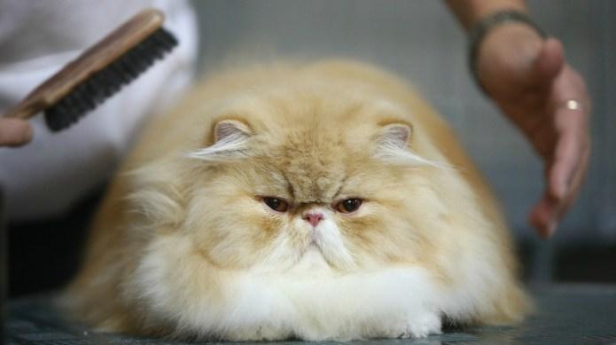 Cats aren't the low-maintenance pets we