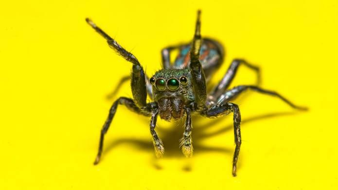 When to Perform Spider Bite Treatment