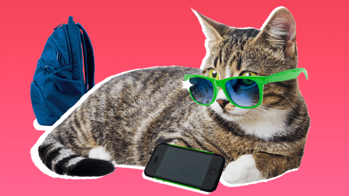 How Teenagers Are Like Cats
