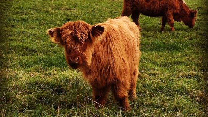 10 Animals that look way better