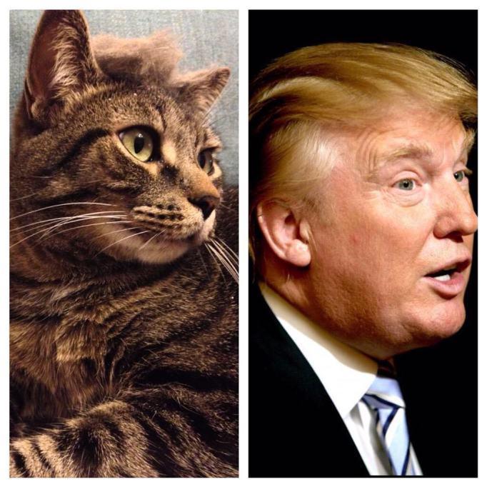 The-Trump-pose