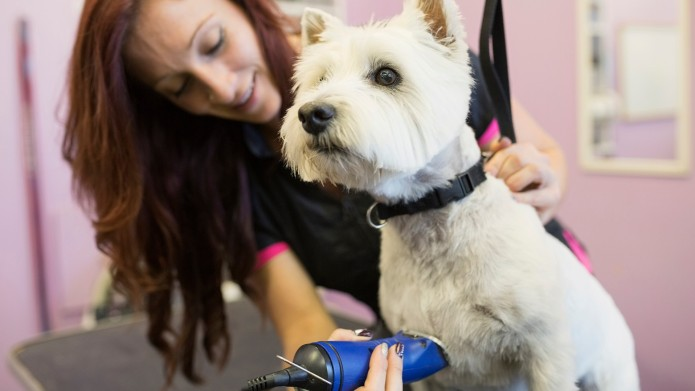 Does Shaving Your Dog's Coat Really