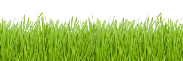 Letting your lawn go dormant