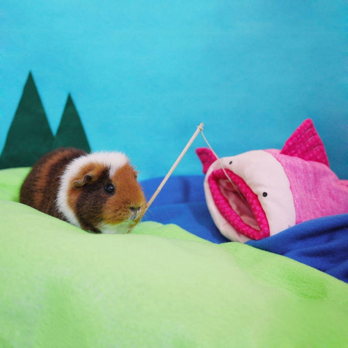 Guinea pig dressed up