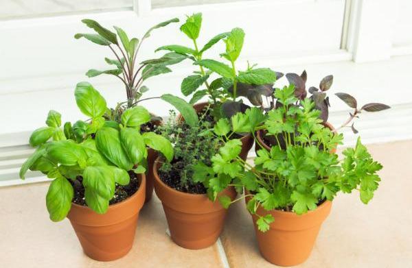 Garden ideas for small spaces