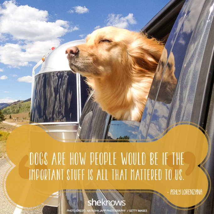 """""""Dogs are how people would be if the important stuff is all that mattered to us."""" —Ashly Lorenzana"""