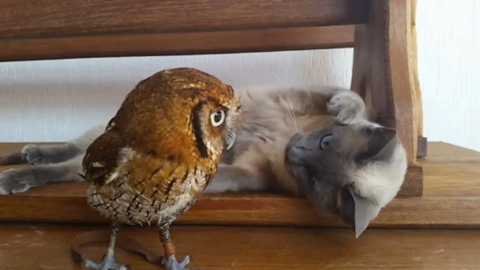Owl and kitty are unlikely but