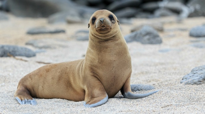 California's sea lions are in serious