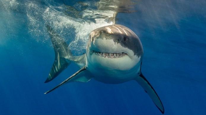 12 Killer Recipes for Shark Week