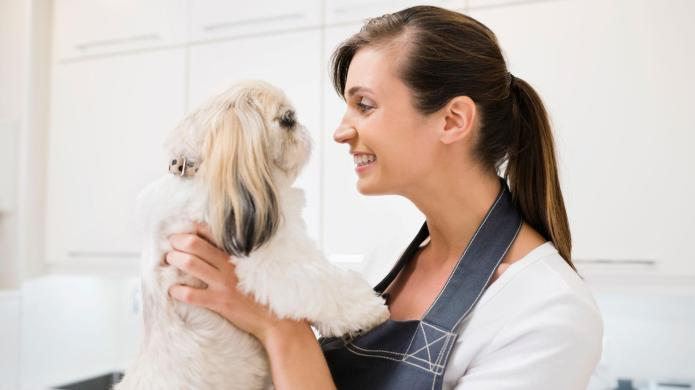 Cleanest, odorless pets for small homes