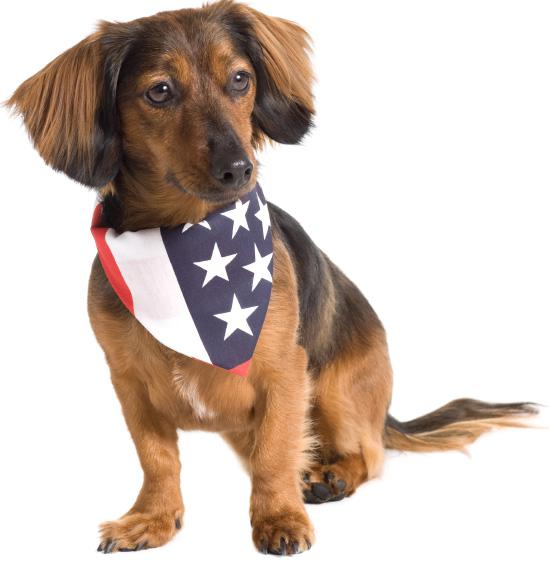 July 4th firework safety for pets