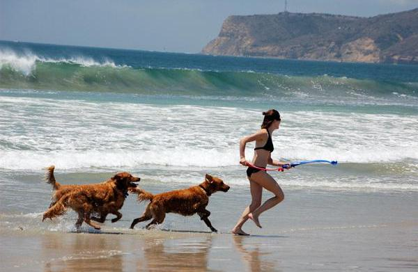 Vacation destinations you and your pet