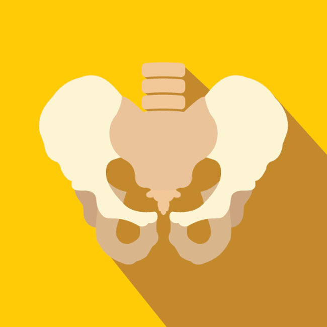 Human pelvis on yellow background
