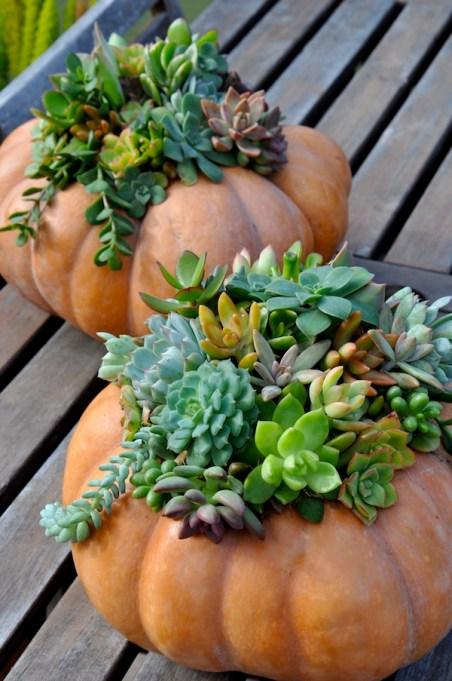 DIY Succulent Pumpkin Planter
