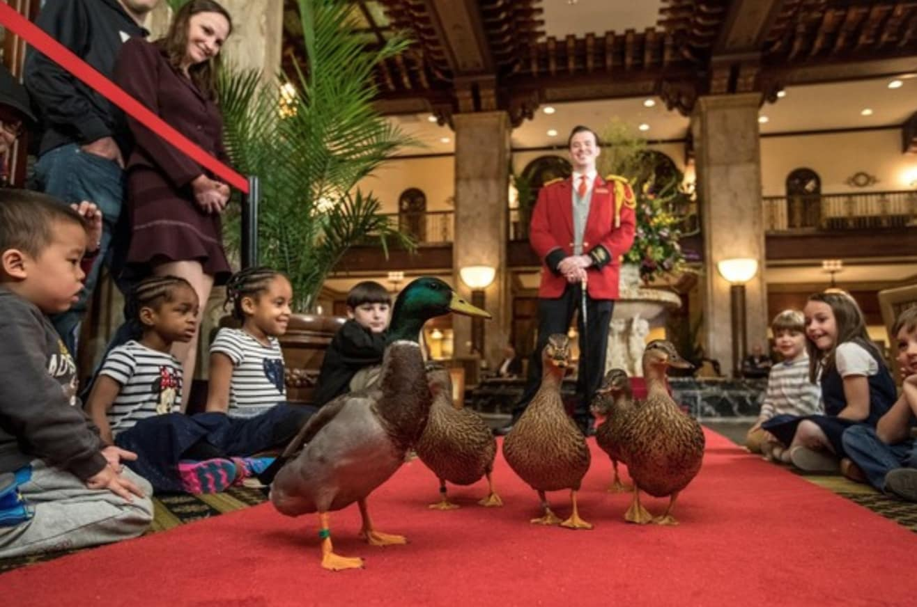 Peabody Hotel Memphis March of the Ducks