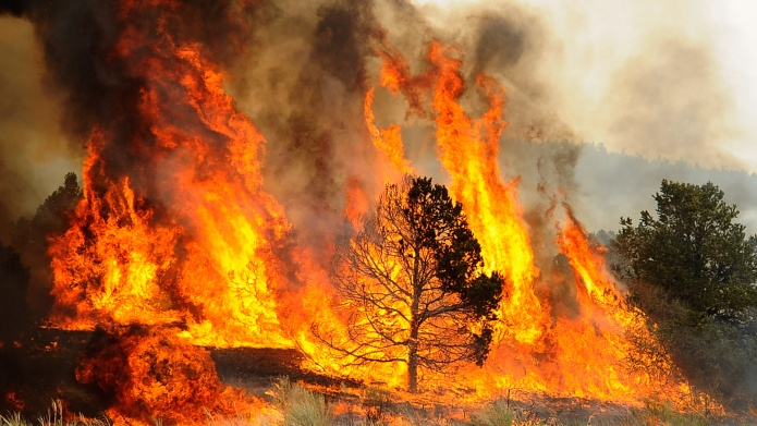 Gender-Reveal Stunt Caused Massive Wildfire in