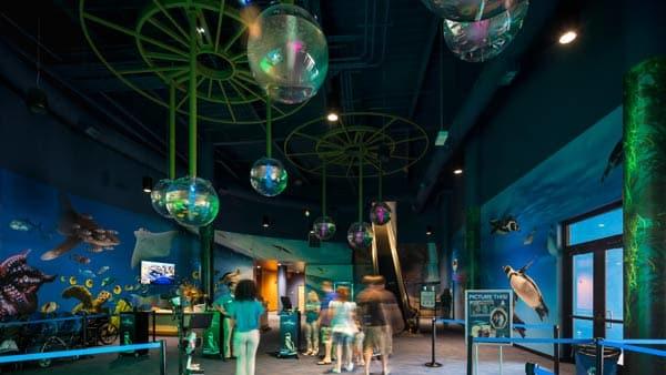 Where to go: OdySea Aquarium