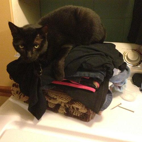 Laundry laze