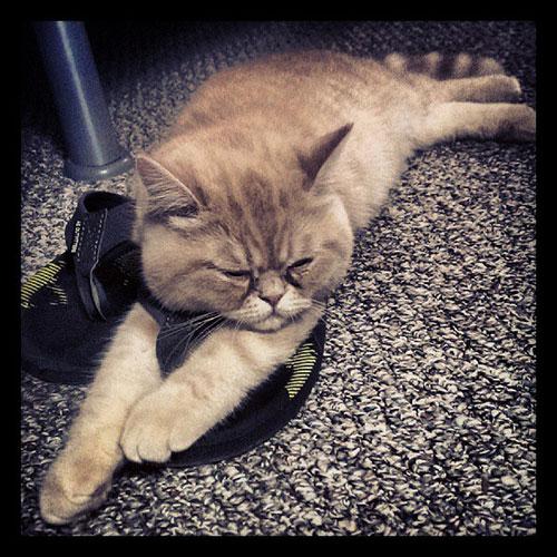 Shoe siesta