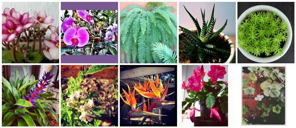 Top 10 houseplants for children