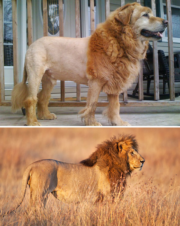 King of the jungle or dog park?