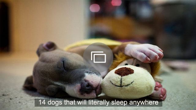 14 dogs that will literally sleep anywhere
