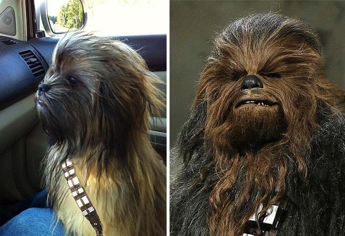 Wookie or dog?