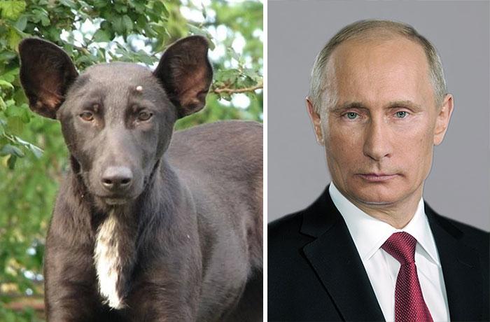 Dog that looks like the Russian President Putin