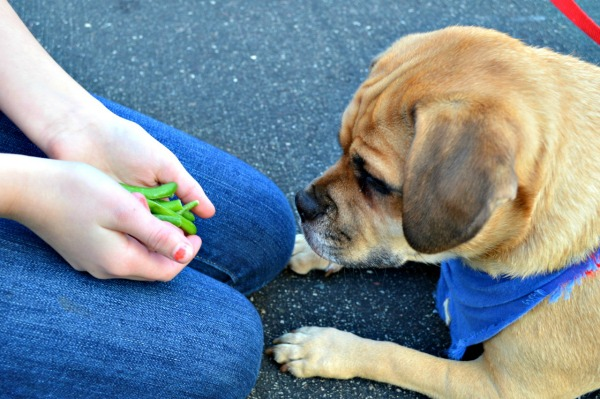 10 foods that are dangerous for dogs, and 5 that aren't