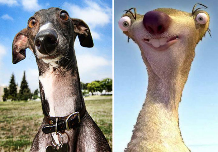 Dog that looks like Ice Age character