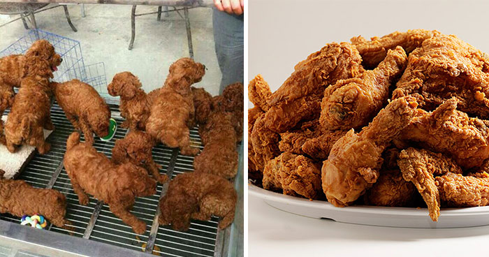 Puppies that look like a plate of fried chicken