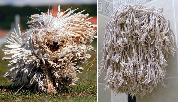 A dog or a mop?