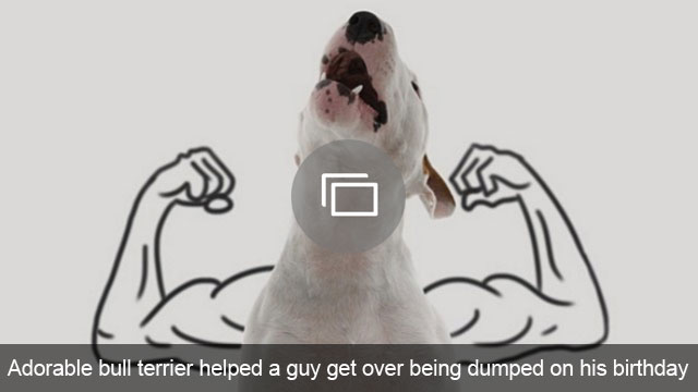 Adorable bull terrier helped a guy get over being dumped on his birthday