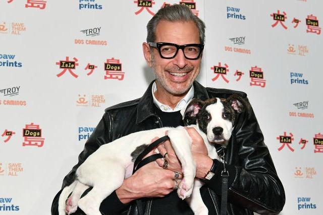 Jeff Goldblum snuggles a puppy promoting Isle Of Dogs