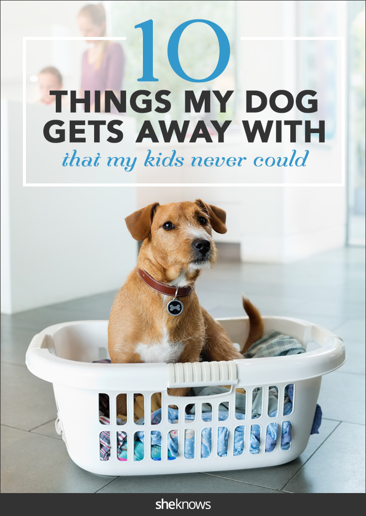 10 things my dog gets away with that my kids never could