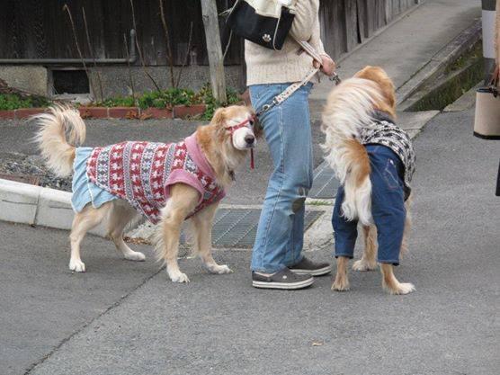 Dogspotting 3