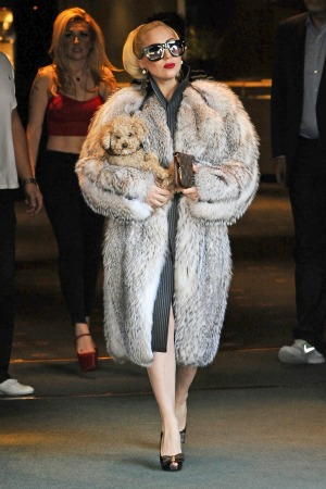 Fur Lady Gaga
