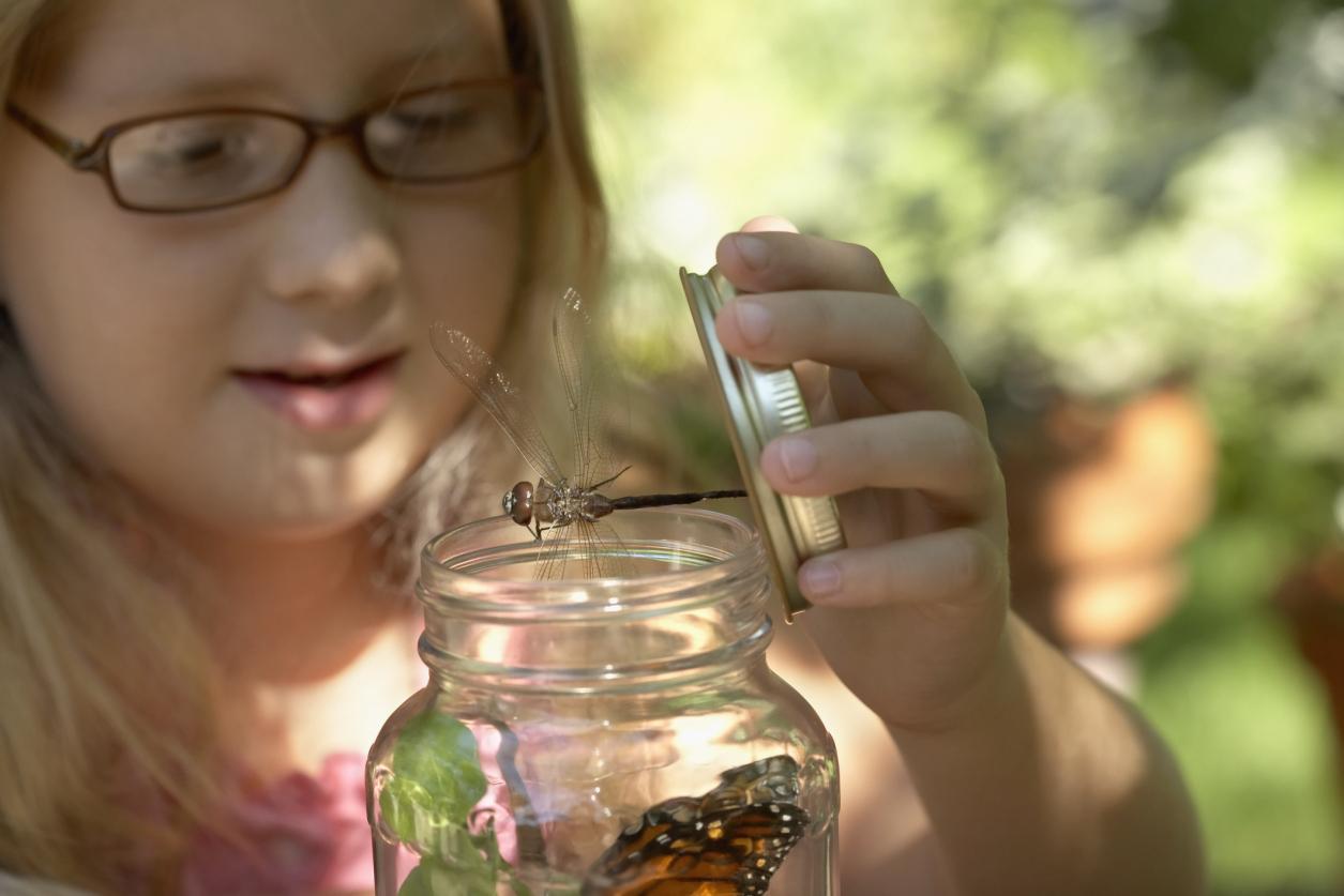 mason jar bugs