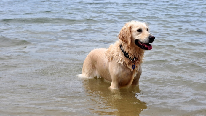 Dogs that love to swim are