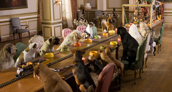 The dogs of Hotel for Dogs