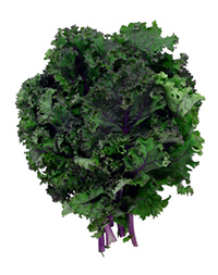 Kale | Sheknows.ca