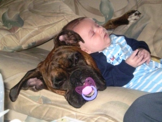 Sometimes the dog needs the pacifier too