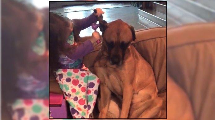 Most patient dog ever lets little