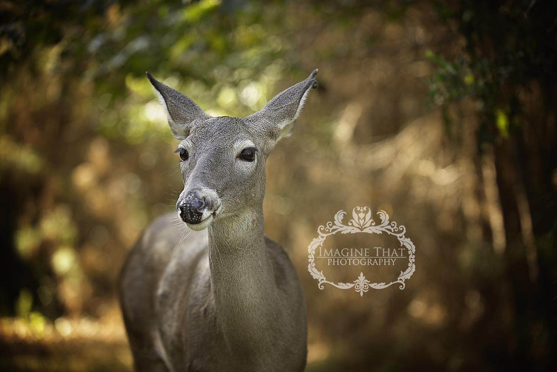 maggie-the-photobombing-deer