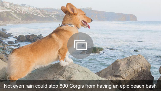 Not even rain could stop 600 Corgis from having an epic beach bash