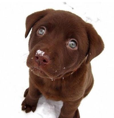 Heart melting puppies 13