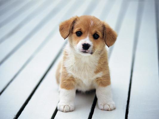 Heart melting puppies 2