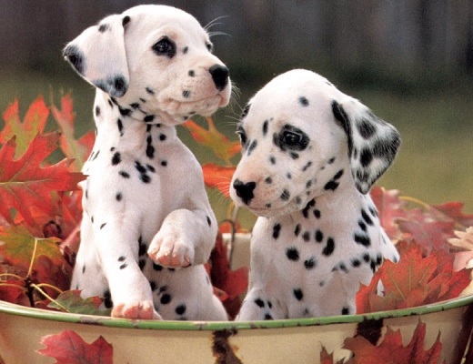 Heart melting puppies 3